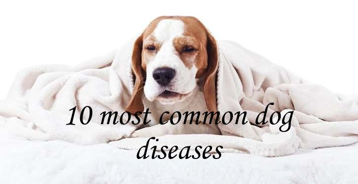 Know About These 10 Common Dog Diseases and Their Cure