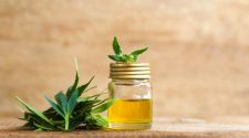 CBD Oil VS Hemp Oil (Seed) – Medicinal Uses