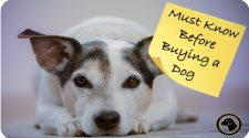 Things You Need to Know Before You Get a Dog