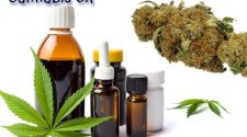 What You Need to Know About Cannabis Oil for Dogs