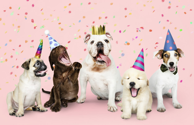 Group of puppies celebrating a new year Free Photo
