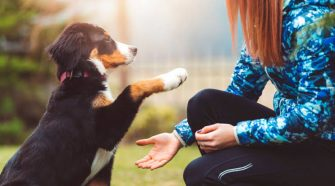 How Giving Your Pet CBD Can Help With Common Illnesses