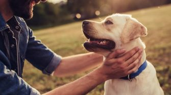 What CBD Products Are Best For Your Pets?