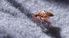 Tips on Selecting a Bed Bug Control Expert
