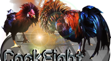 What Are The Cons Of Live Cockfighting Gaming