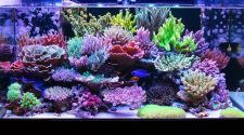 Top Tips To Keep In Mind When Starting A Reef Tank